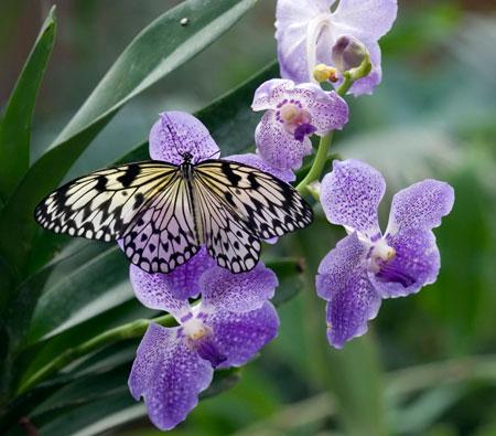 Come una farfalla ma vi - Come curare un orchidea in casa ...
