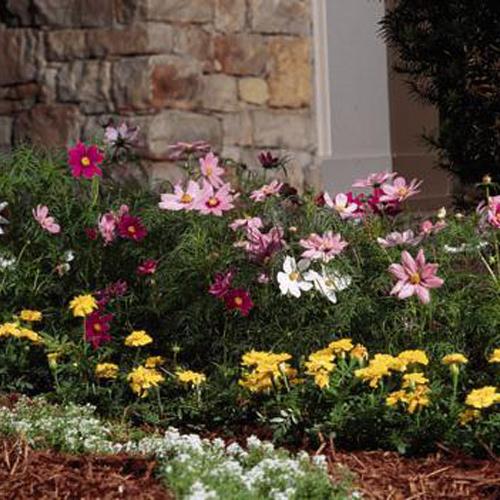 Un giardino fiorito ma vi for Giardino fiorito